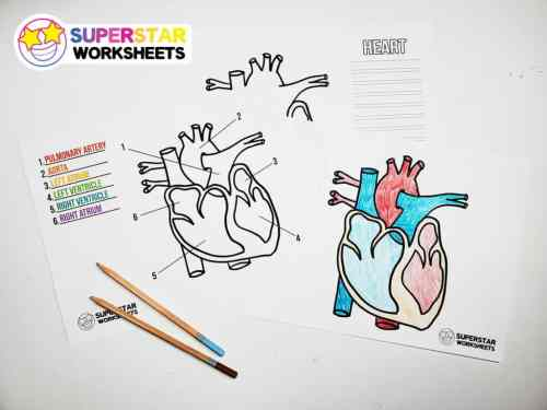 small resolution of Heart Worksheets - Superstar Worksheets