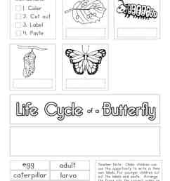 Butterfly Worksheets - Superstar Worksheets [ 1024 x 791 Pixel ]
