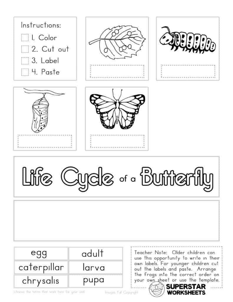 medium resolution of Kindergarten Worksheets - Superstar Worksheets