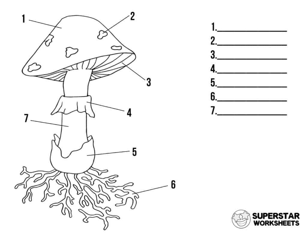 Mushroom Life Cycle Worksheets