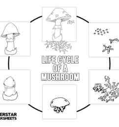 Mushroom Life Cycle Worksheets - Superstar Worksheets [ 791 x 1024 Pixel ]