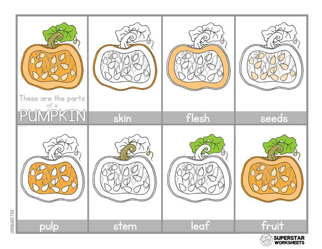 Parts Of A Pumpkin Worksheets