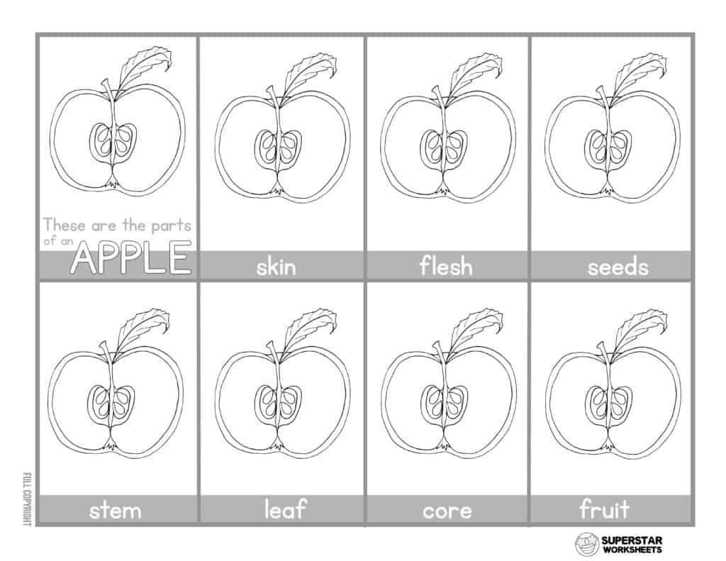 hight resolution of Apple Worksheets - Superstar Worksheets