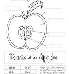 Apple Worksheets - Superstar Worksheets [ 1024 x 791 Pixel ]