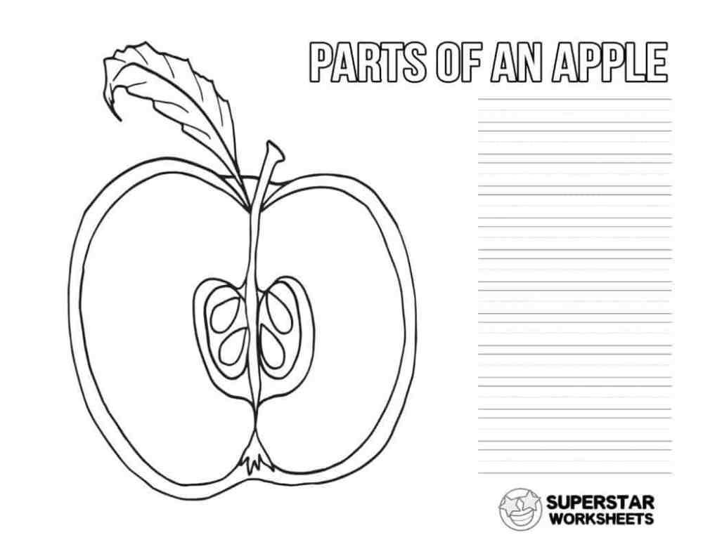 medium resolution of Apple Worksheets - Superstar Worksheets