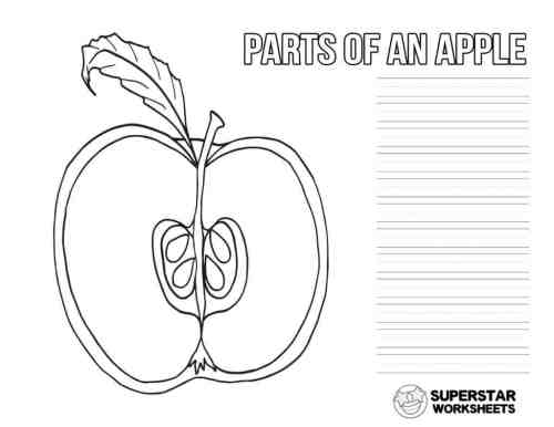 small resolution of Apple Worksheets - Superstar Worksheets