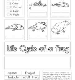 Life Cycle of a Frog Worksheets - Superstar Worksheets [ 1024 x 791 Pixel ]