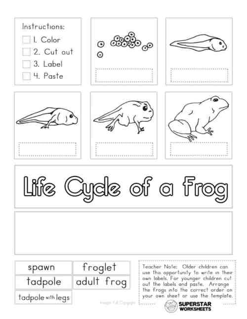 small resolution of Life Cycle of a Frog Worksheets - Superstar Worksheets