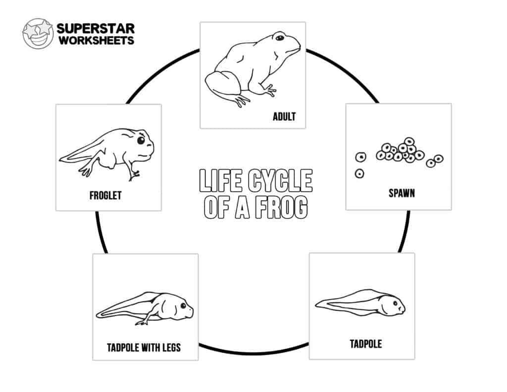 hight resolution of 4th Grade Life Cycle Worksheet   Printable Worksheets and Activities for  Teachers