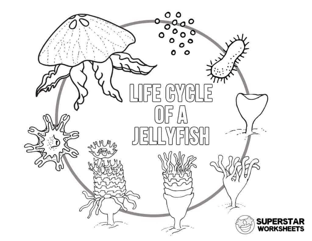 Jellyfish Worksheets