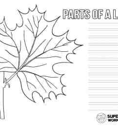 Parts of a Leaf Worksheet - Superstar Worksheets [ 791 x 1024 Pixel ]