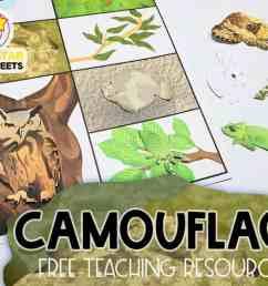 Animal Camouflage Worksheets - Superstar Worksheets [ 768 x 1024 Pixel ]