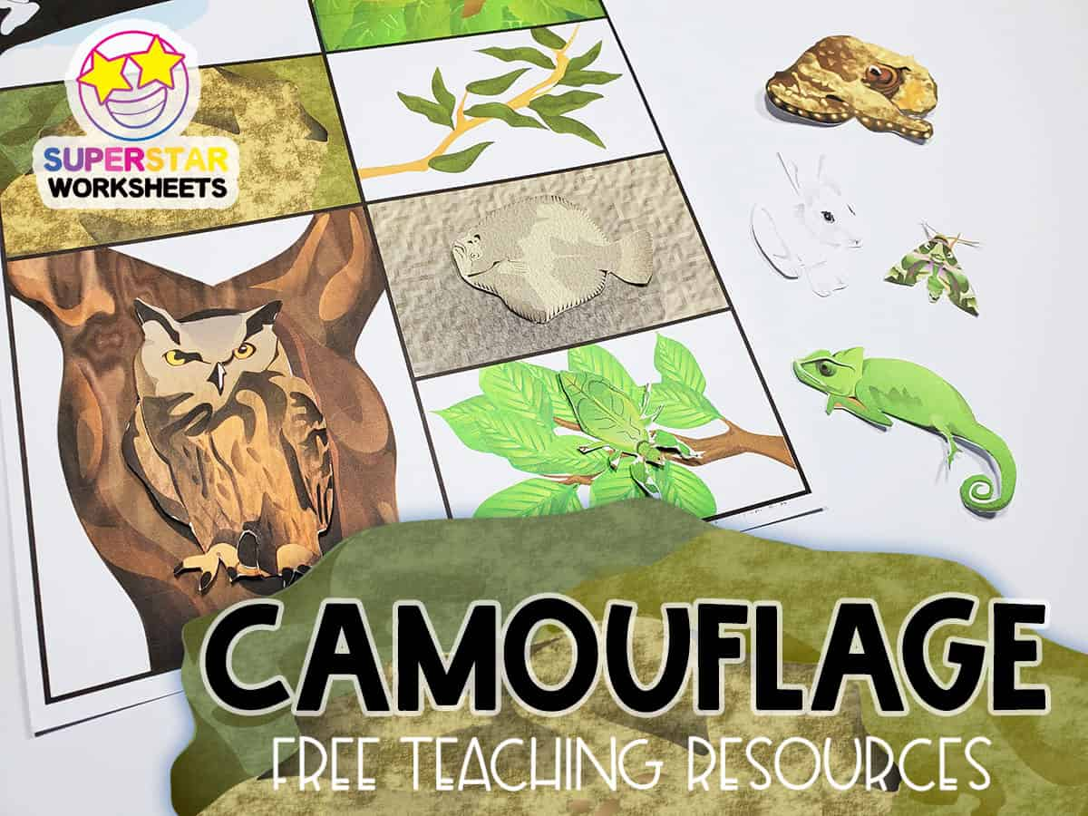 Animal Camouflage Worksheets
