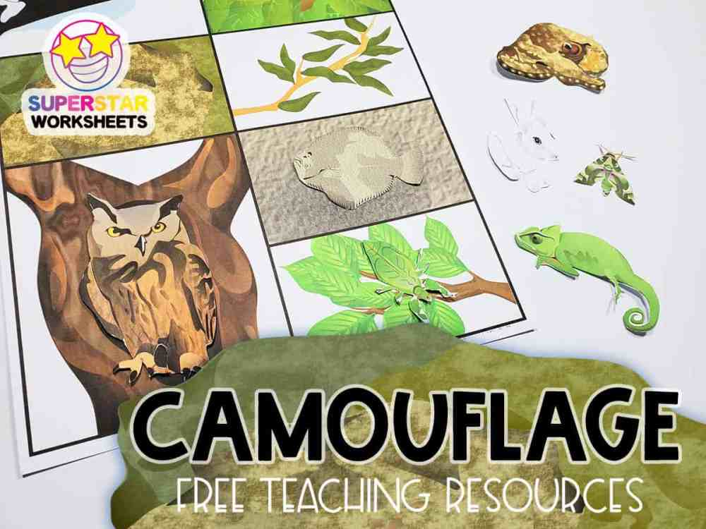 medium resolution of Animal Camouflage Worksheets - Superstar Worksheets