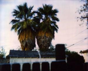 palmbuddies_crop