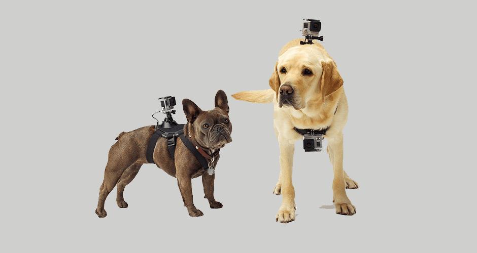 Wearables e IOT's para animais domésticos