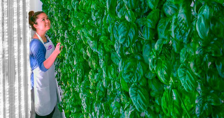 O futuro da agricultura (vertical)