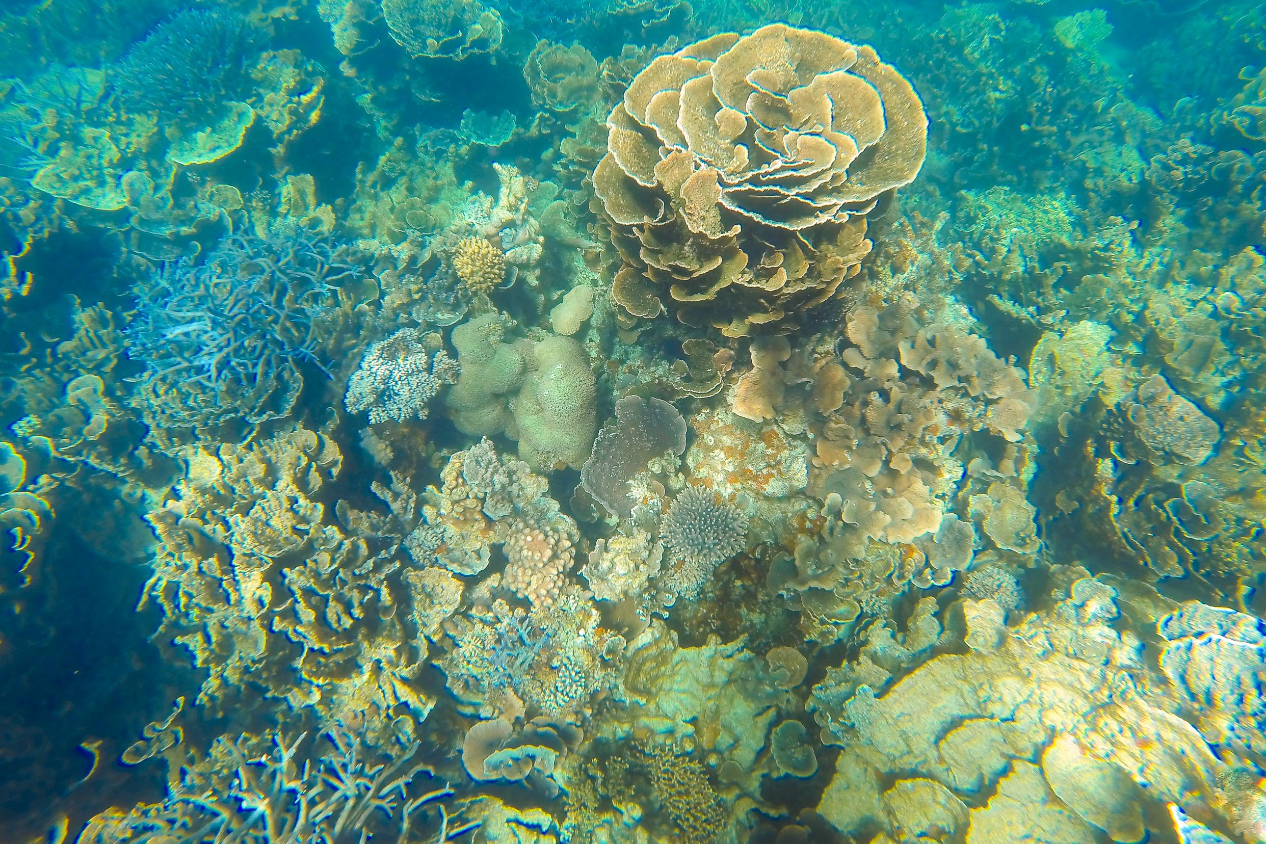 coral bay ayers rock reef