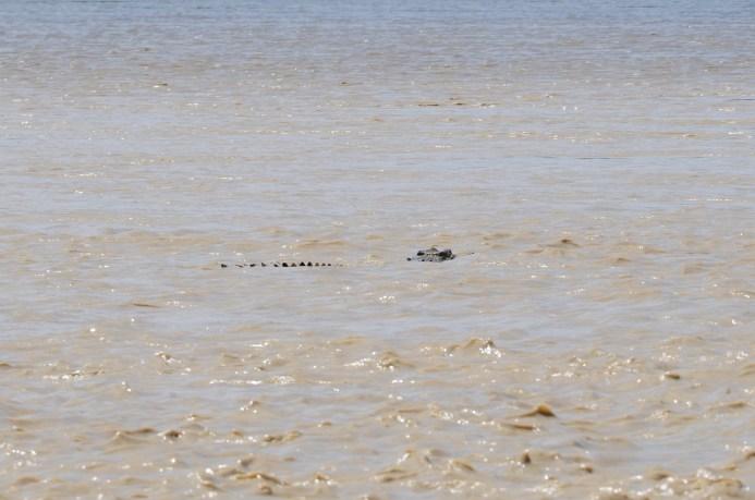 kakadu south alligator