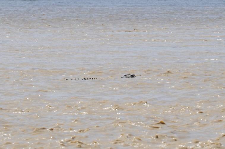 south alligator crocodile kakadu