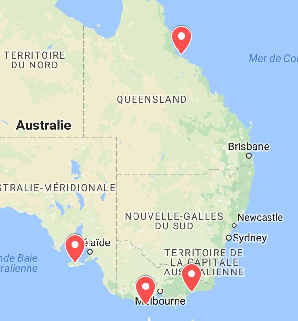 animaux d'australie où voir des koalas