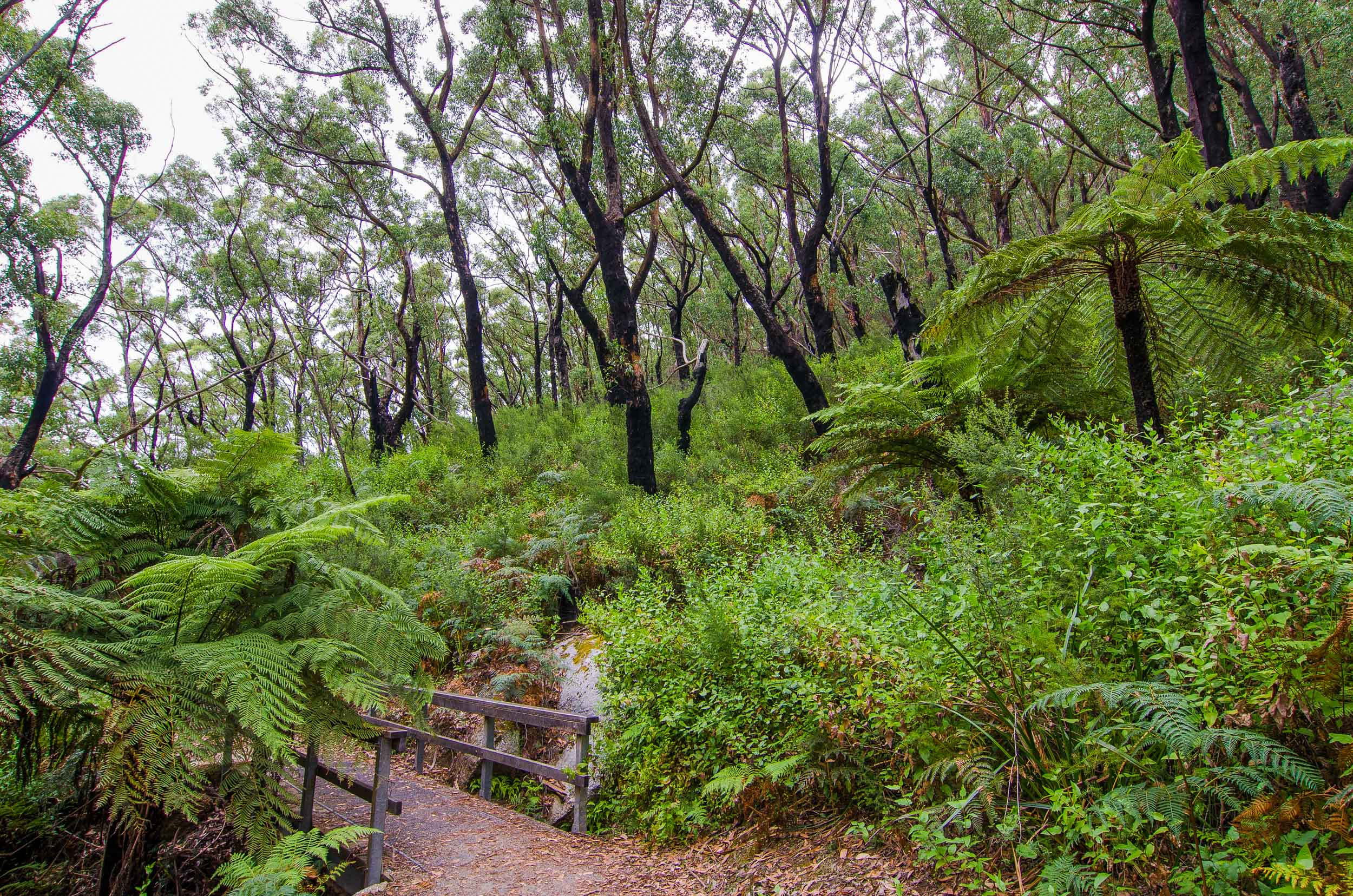 lilly pilly gully nature walk wilsons promontory