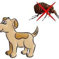 Antipulgas y garrapatas parasitos