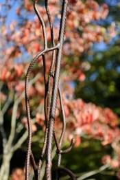 pergola metal vegetal supervolum 2014 (16)