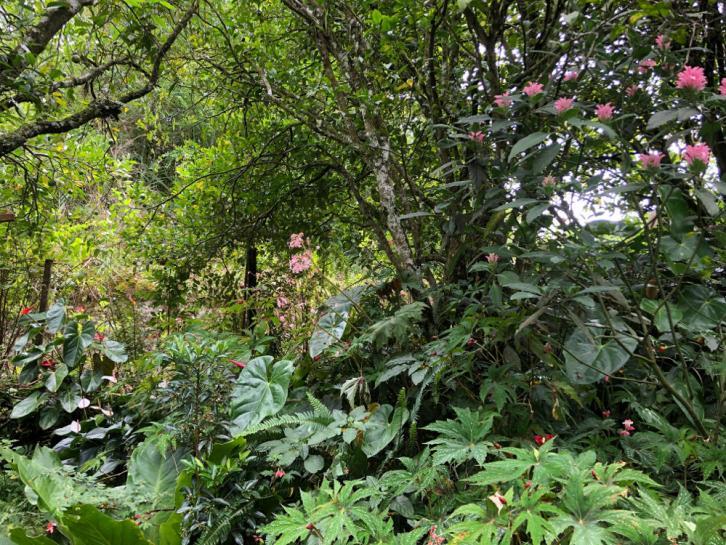 jardins de Romain Nativel