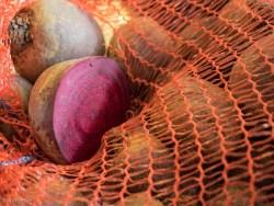 Frische Rote Bete im Sack, eine halbiert mit der Schnittkante zum Betrachter