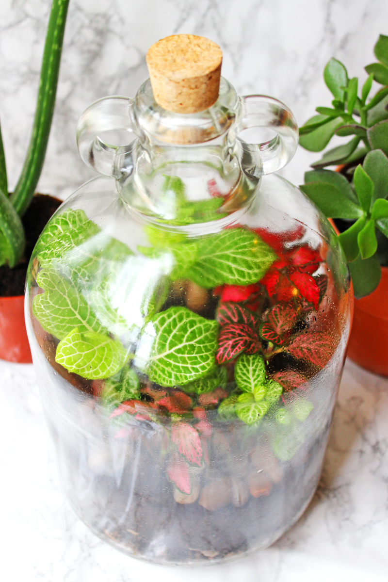 Gorgeous How To Make A Terrarium  Supper In The Suburbs With Likable Find Out Just How Easy It Is To Make A Terrarium At Home Filled With With Comely Outlet Mall Jersey Gardens Also Somerset Gardens Family Health Centre In Addition Beechgrove Garden Location And Gardens Of Holland As Well As Food Market Covent Garden Additionally Flower Garden Decorations From Supperinthesuburbscom With   Likable How To Make A Terrarium  Supper In The Suburbs With Comely Find Out Just How Easy It Is To Make A Terrarium At Home Filled With And Gorgeous Outlet Mall Jersey Gardens Also Somerset Gardens Family Health Centre In Addition Beechgrove Garden Location From Supperinthesuburbscom