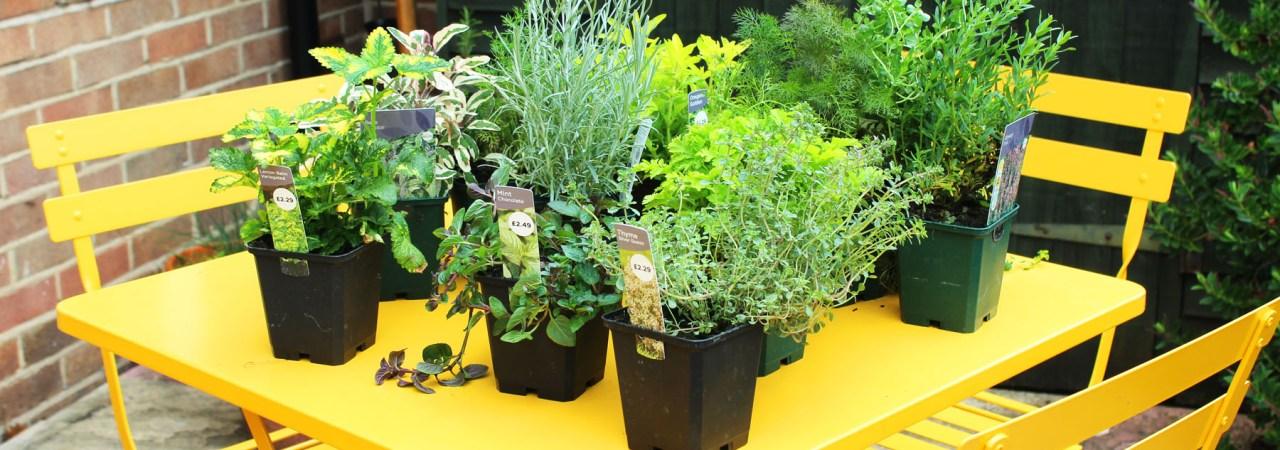 Every Kitchen Garden needs herbs. Find out how I've incorporated herbs in to my Kitchen Garden design with these outdoor ladder shelves, some terracotta pots and a sharpie!
