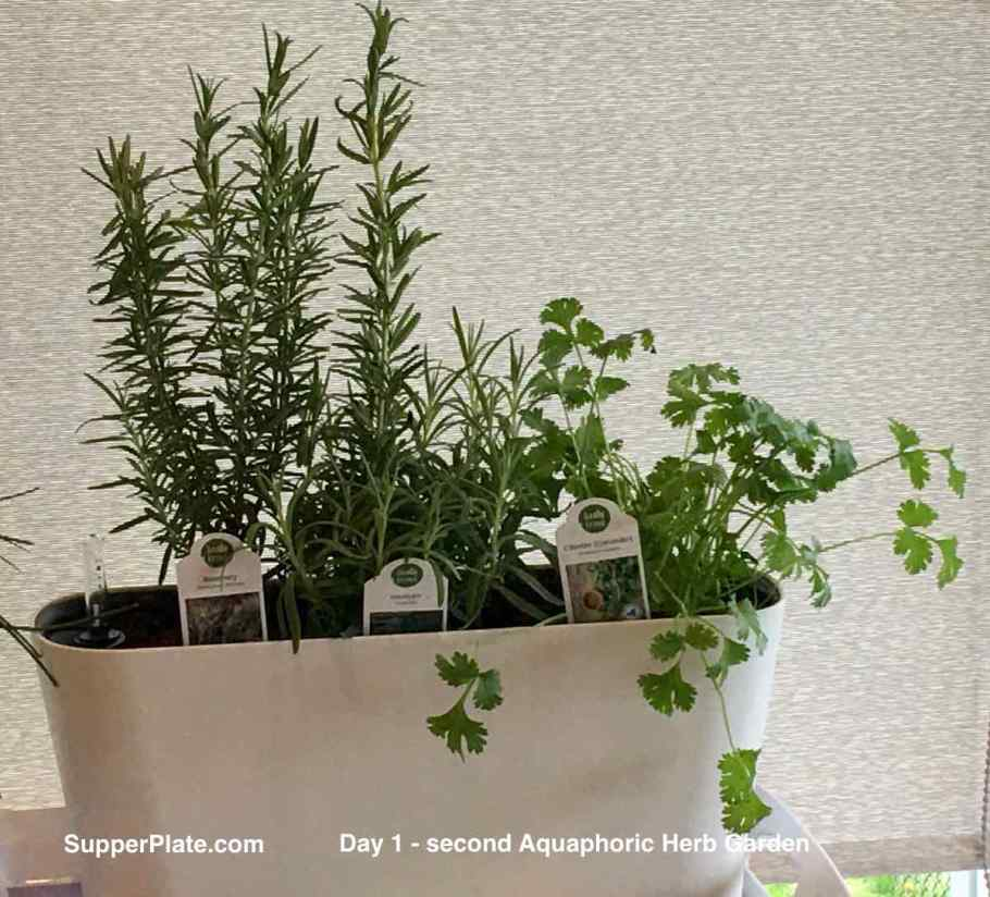 Aquaphoric Herb Garden Review with rosemary lavender and cilantro day 1 of planting