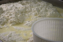 ricotta farm and cooking-1045