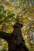 colours of autumn web-9885723