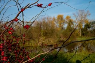 colours of autumn web-9885750