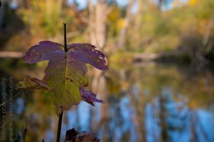 colours of autumn web-9885759