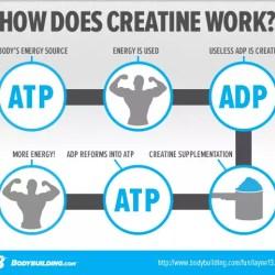 werking creatine