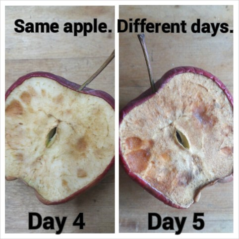 apple day 4 and 5