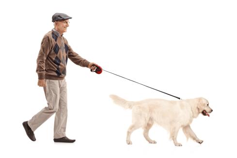 dog helps in diabetic
