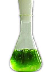 Algae-Oil