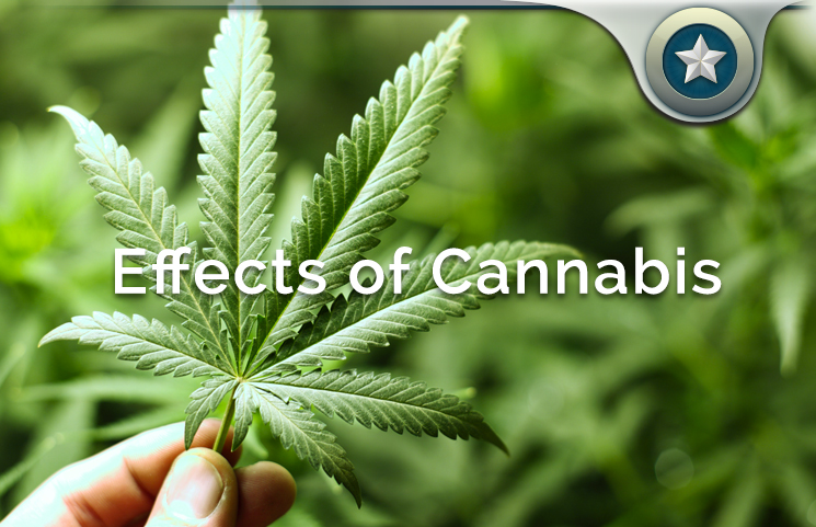 Cannabis Side Effects Review 5 Negative Adverse Risks