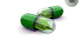 """NFL's Roger Goodell """"Addictive Medical Marijuana, Addictive, No Benefits"""""""