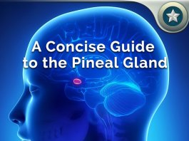 Pineal Gland Guide
