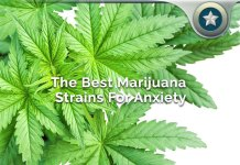 Best Marijuana Strains For Anxiety