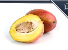 Gutli Mango Kernel Seeds Mangiferin Extract