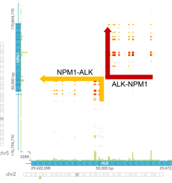 to determine the chromosomal rearrangement it is easiest to draw out a schematic of the wild type gene organization based on the haplotypes view and the  [ 2747 x 2648 Pixel ]