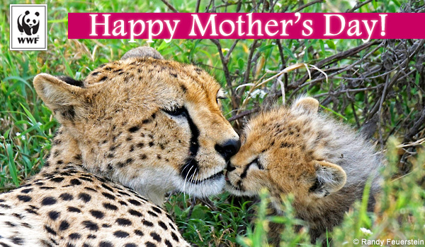 WWF Mother's Day Ecards World Wildlife Fund