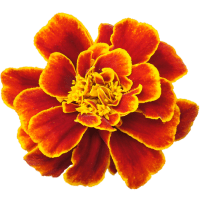 Green Thumbs: Looking Forward and Great Summer Blooms to Plant now