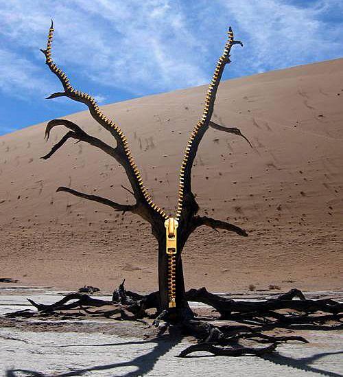 open-tree